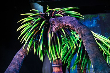 A Brachiosaurus eats foliage during the opening night of Walking With Dinosaurs at Rexall Place in Edmonton, Alta., on Wednesday, Sept. 24, 2014. The show features 20 life-size dinosaurs. Codie McLachlan/Edmonton Sun/QMI Agency