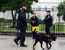 Man jumps White House fence, stopped by Secret Service dogs