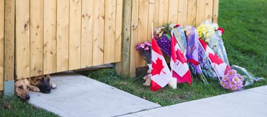 Two dogs peek out from under a gate at the Hamilton, Ont., home of slain soldier Cpl. Nathan Cirillo, Oct. 23, 2014. (ERNEST DOROSZUK/QMI Agency)