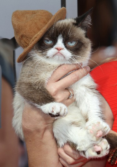 Grumpy Cat at the 23rd Annual MTV Movie Awards at the Nokia Theatre in Los Angeles, April 13, 2014. (FayesVision/WENN.COM)