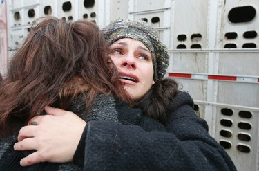 Animal rights activists stage an act of civil disobedience, blocking trucks transporting cows to slaughter at St. Helen's Meat Packers in Toronto, on Thursday, November 6, 2014. Stan Behal/Toronto Sun/QMI Agency
