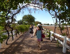 Visitors stroll along pathways at the Farm at Agritopia in Gilbert, Arizona. ROBIN ROBINSON/TORONTO SUN