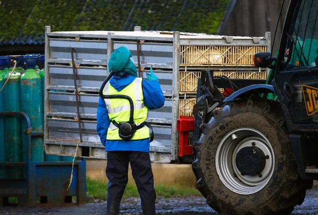 Officials move crates of ducks in preparation for culling at a duck farm in Nafferton, England, Nov. 18, 2014. Tests by the Canadian Food Inspection Agency have confirmed the presence bird flu on B.C. farms. (DARREN STAPLES/Reuters)