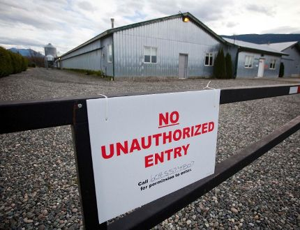 A Fraser Valley farm hit by the bird flu. (REUTERS)