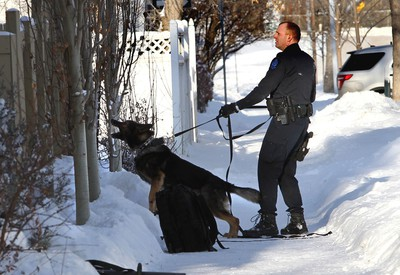 An Edmonton Police Service dog unit team cover an area of a yard on 107 St., and 84 Ave., in Edmonton, Alta., on Saturday Jan. 3, 2015. The police arrested a man on a Canada wide warrant. Perry Mah/Edmonton Sun/QMI Agency