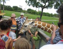 Participants on the Serengeti Safari tour feed lettuce to a giraffe at Busch Gardens in Tampa, Fla. KYLE HANNON PHOTO
