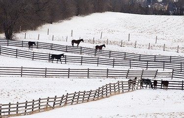 Wooden fences frame a team of horses on a farm in Peterborough, Ont., on Wednesday, Jan. 21, 2015. (Clifford Skarstedt/QMI Agency)