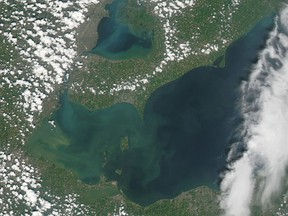 Western Lake Erie is green with monster algae blooms in this NASA satellite image taken last August as the scourge took off in the summer heat. Lake St. Clair, above Erie, is the same. Scientists believe they've found a genetic link between toxic algae in the two lakes, and Southwestern Ontario's Thames River — which drains into the system of lakes — is a contributing culprit.