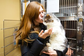 Rebecca Rennie got quite the surprise when she found her cat, who had been missing for four years, at the Lincoln County Humane Society. Rennie picked up her cat, Rosie, on Tuesday, Feb. 3, 2015. (Julie Jocsak/QMI Agency)