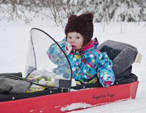 wo-year-old Avery-Lea Charron eats some snow while enjoying a ride in her buggy being pulled by skier Kim Gemmell at the Cross-Country Ski Club during the club's Chili and Night Ski event March 14.