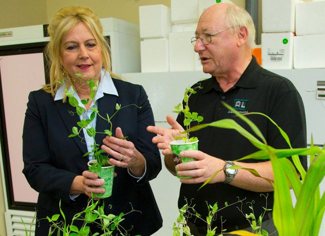 MP Susan Truppe holds an Austrian Pea grown in soil populated with helpful microorganisms while A&L Biologicals Research Director holds the same plant grown in soil that didn't have the same microfauna in place, leading to a weaker, smaller plant during a press conference in London, Ont. on Friday March 20, 2015. (MIKE HENSEN, The London Free Press)