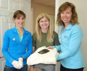 Jessica Laws / For the Intelligencer Dr. Naomi Scromeda (left) and Dr. Linda Hack (right) of the Bay Regional Veterinary Hospital were joined by Dr.  Sue Carstairs (centre) from the Kawartha Turtle Trauma centre on March 25, 2015 to learn about treatment and care for injured turtles.