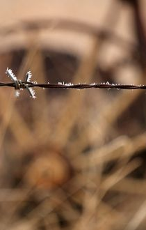 Frost barbed wire fence Alberta