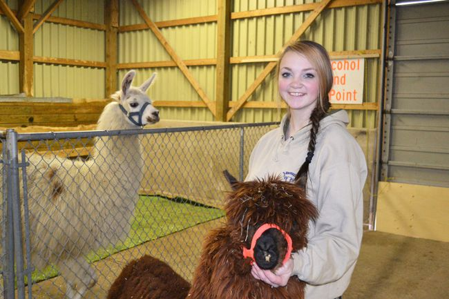 Roots of Bruce volunteer and Hanover 4-H Club member Allison Pepper is with Muffin the Alpaca and in the background is Candy Cane the Llama in 2016.