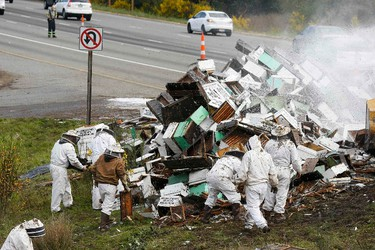 Beekeepers attend to a semi-trailer truck that overturned with a cargo of bees on a highway in Lynnwood, Washington April 17, 2015.  A truck carrying millions of honey bees overturned on a freeway north of Seattle on Friday, creating a massive traffic jam as the swarming insects stung firefighters, officials said. REUTERS/Ian Terry