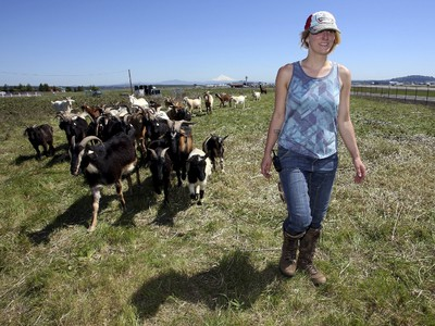 Briana Murphy, a shepherdess, herds goats at the Portland International Airport in Portland, Oregon April 17, 2015. In a city that loves its goats, the Portland International Airport now has a temporary herd. Forty goats and a llama started munching this week on invasive plants such as blackberries, thistle and Scotch broom near the PDX airfield. The llama's job is to keep away predators like coyotes. REUTERS/Steve Dipaola
