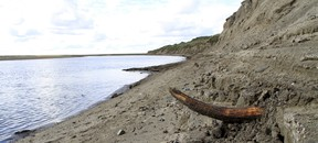 A mammoth tusk is pictured by a river on the Taimyr Peninsula in Siberia. (REUTERS/Love Dalen)