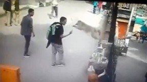 A wild monkey jumps towards a young man, shortly after he had flipped off the animal. (YouTube screengrab)