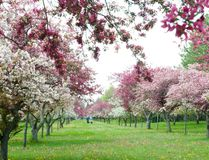 The Crabtree Allee at the Niagara Parks Botanical Garden. (Theresa Forte/Special to Niagara Falls Review)