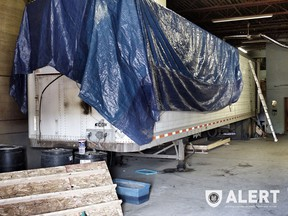 More than 150 plants were seized from a converted semi-trailer in Edmonton. (Photo Supplied/ALERT)