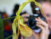 Foothills Orchid Show_1