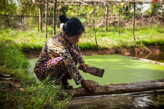 The Fish on Farms project started as an initiative to help low-income female farmers in Cambodia create fish farms.