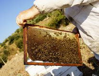 A beekeeper is pictured in this file photo. (Fotolia)