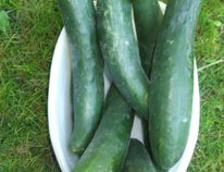 (Ted Meseyton photo library Phytochemicals found in cucumbers can help relieve bad breath and neutralize mouth bacteria. Suck on the cut end of a small cucumber or press a slice of cuke to roof of your mouth with tongue or thumb for thirty seconds and then expel it.