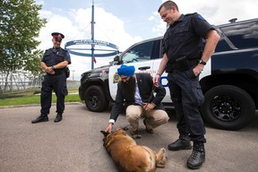 Edmonton Police Service Cst. Jason Born (right) and his police dog Xeiko, a Belgian Malinois police dog, introduce themselves to Minister of State for Multiculturalism Tim Uppal (centre) while Acting Staff Sgt. Adam Segin looks on during a news conference about Quanto's Law at the EPS' Vallevand Kennels in Edmonton, Alta., on Thursday July 23, 2015. The law, which came into effect on June 23, 2015, increases the legal penalty for killing or wounding service dogs. Ian Kucerak/Edmonton Sun