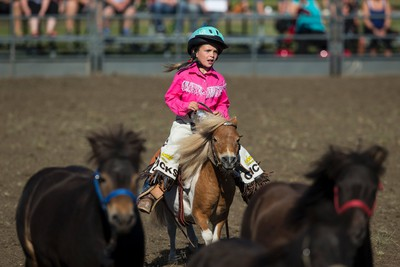 Kendi, a pickup girl, rounds up ponies after the wild pony race during Bulls For Breakfast at Big Valley Jamboree 2015 in Camrose, Alta. on Friday July 31, 2015. Ian Kucerak/Edmonton Sun/Postmedia Network
