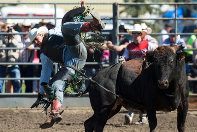 Chris Young from Australia dismounts during Bulls For Breakfast at Big Valley Jamboree 2015 in Camrose, Alta. on Friday July 31, 2015. Ian Kucerak/Edmonton Sun/Postmedia Network