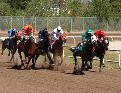 Seven horses and jockeys race down the open stretch on Sunday August 23, 2015 during the Horses at Evergreen Park. The horse racing season at the park wraps up next weekend. Logan Clow/Grande Prairie Daily Herald-Tribune/Postmedia Network