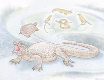 An illustration of a reptile named Eunotosaurus that lived 260 million years ago and that scientists say is the earliest-known turtle, even though it did not have a shell, is shown in this undated handout image. The researchers say the evolutionary origins of turtles and how they are related to other major groups including lizards, snakes, crocodiles and birds have been topics of vigorous debate for as long there has been a theory of evolution. REUTERS/American Museum of Natural History, Mick Ellison/Handout via Reuters