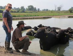 Lori Smith and Martin Littkemann with some of the herd of over 350 Water Buffalo at their spread just north of Stirling are looking forward to being the main attraction at the 7th annual Stirling Water Buffalo Festival Saturday Sept. 19 in the village.