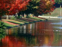 Colourful fall foliage is reflected in the canal as Canada geese paddle below the Peterborough Lift Lock. Clifford Skarstedt/Postmedia Network