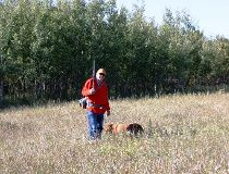 Emmerson Dober and Penny in heavy cover at the Daysland pheasant release site. (Neil Waugh photo)