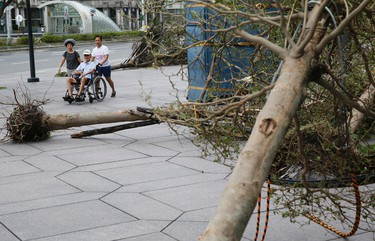 A caregiver wheels an elderly man past fallen trees from Typhoon Dujuan in the business district of Taipei, Taiwan, Tuesday, Sept. 29, 2015.  (AP Photo/Wally Santana)