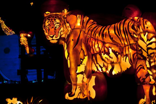 <p>Show is the tiger from the Animals of Noah's Arc display at Pumpkinferno at Upper Canada Village, Oct. 4, 2015 in South Dundas, Ont. Parks of the St. Lawrence Commission Handout/Cornwall Standard-Freeholder/Postmedia Network