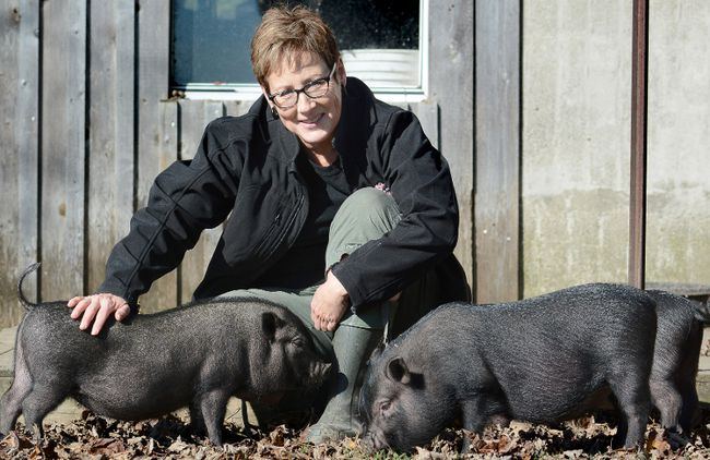 Cedar Row Farm Sanctuary's Siobhan Poole is shown with three young potbelly pigs known as the Minions on Monday Lakeside. (SCOTT WISHART/The Beacon Herald)