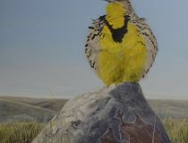 Song of Pride-Western Meadowlark. (Colin Starkevich/Supplied image of a painting)