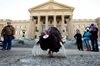 Buddy the turkey stands outside the Alberta Legislature as farmers gather to protest Bill 6, in Edmonton, Alta. on Friday Nov. 27, 2015. David Bloom/Edmonton Sun