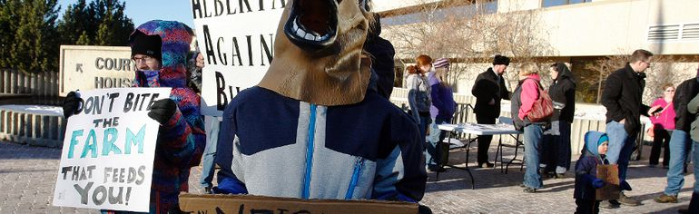 A horse-masked Tristan Waldner, his mother and siblings were amongst a group of about 30 that protested the proposed provincial legislation known as Bill 6 on Monday November 30, 2015 at the Provincial Building in Grande Prairie, Alta.  Tom Bateman/Grande Prairie Daily Herald-Tribune/Postmedia Network