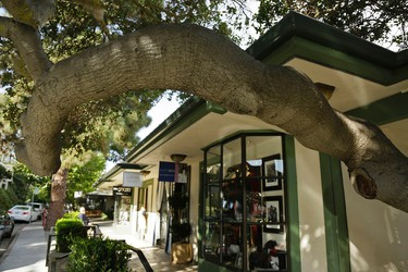 "In this photo taken Thursday, Nov. 5, 2015, a tree wraps around a walkway along ""Ark Row"" in Tiburon, Calif. Many of the scenic ""Ark Row"" shops are actually housed in turn of the century boat houses that were converted into homes and shops. (AP Photo/Eric Risberg)"