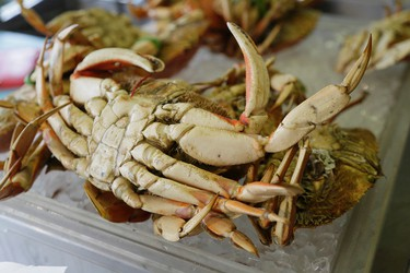 In this photo taken Tuesday, Dec. 8, 2015, a Dungeness crab is seen for sale at Fisherman's Wharf in San Francisco. (AP Photo/Eric Risberg)