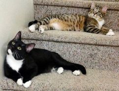 Charles (top step) and Albert (bottom step) are two of about 40 animals currently housed at the PVHS and looking for adoption.