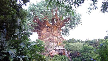The Tree of Life is seen at Disney's Animal Kingdom Park