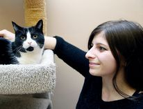 <p>Volunteer Kim Whinfield spends some time with Sadie at the Small Things Cats store in Sudbury, Ont. on Thursday February 4, 2016. Gino Donato/Sudbury Star/Postmedia Network