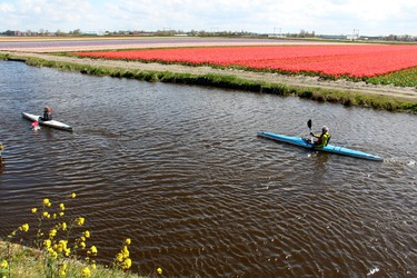 Kayakers paddling the peaceful canals that line  the flower fields in the pretty Netherlands province of South Holland. BRIAN QUINN PHOTO