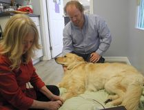 Sandy Powell takes blood from Hank and owner Todd Bickerton comforts his dog. (Wayne Lowrie/Postmedia Network)