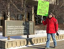 Sherri Sherbo, of Kingsville, Ont., travelled to Chatham, Ont. on February 11, 2016 to show her outrage over area residents charged in connection with a dog-fighting ring. She is pictured here carrying a placard in front of the Chatham court house. (Vicki Gough, The Daily News)